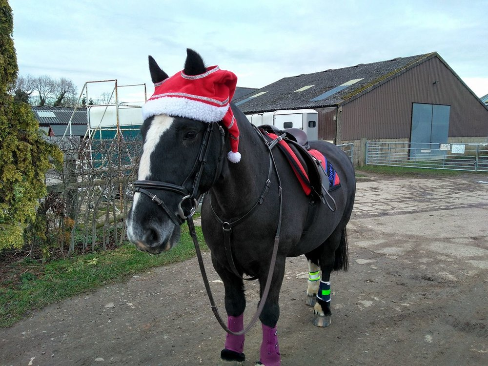 Pepper and his owner Emily are ready to go and spread festive cheer on their ride
