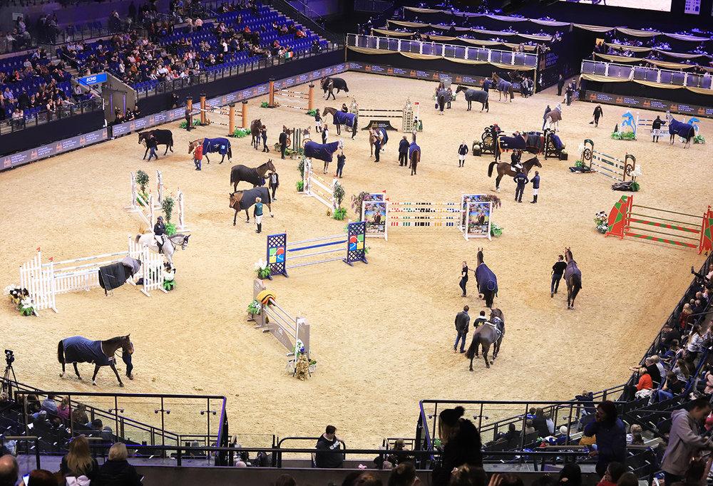 Horses led to safety.jpg