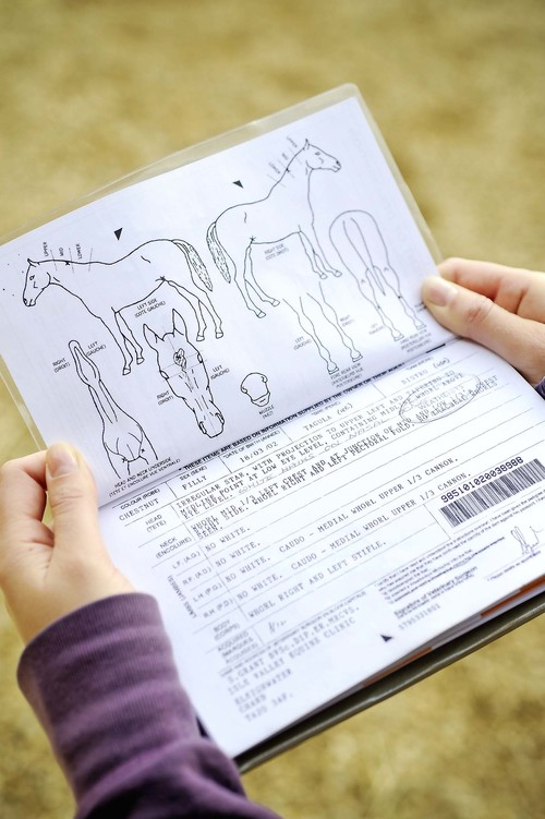 Keep your horse's passport safe