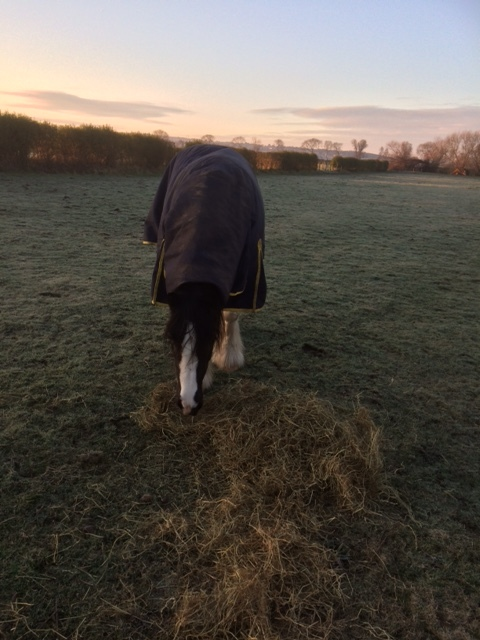 Florence braving the frost
