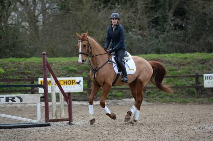 horse-approaching-jump-1.jpg