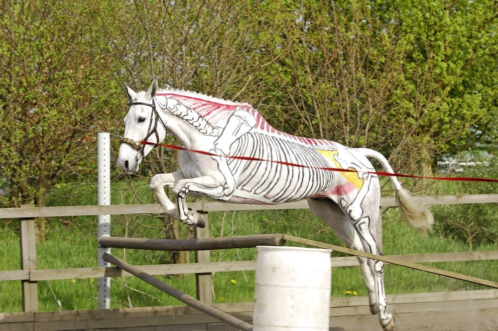 inside out horse.jpg