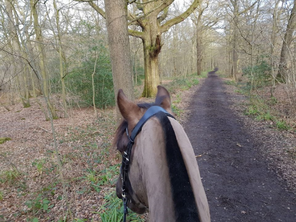Jess Bright   - Ziggy and I have really enjoyed this challenge and have managed 800 miles so far. Looking forward to some lighter, warmer evenings!