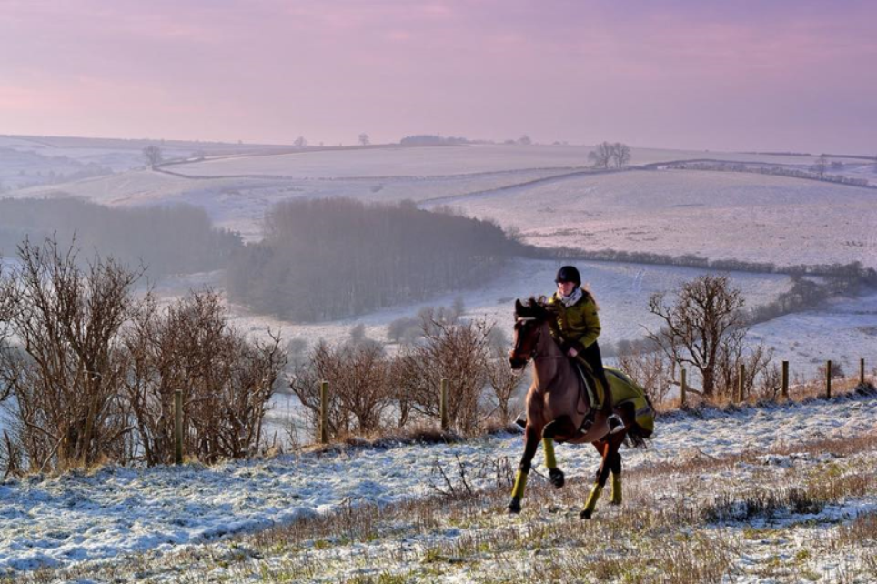 Stephanie Davies  - A few months ago I didn't dare canter this horse and now we are cantering through snow and having a blast together. The challenge is really helping to get me in the saddle to add miles even on days when I'm not feeling so confident.