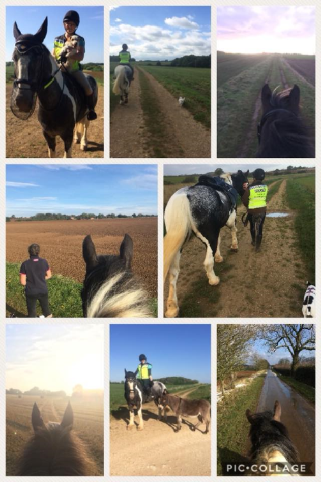 Louise Horwood  - Spearmint and I have managed 336.02 miles so far since starting in April 2017. Spearmint has been very poorly with his RAO (COPD) since starting so not managed many miles at all. We all thought that at 10yrs old he was going to have to retire, but after 2 solid months of aggressive treatment he's responded and we are back doing  #hack1000miles   We both absolutely love doing this challenge, although we would also love some more bridle ways where we are as well. We've had our donkey join us and the dogs   
