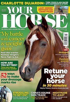 yourhorse.jpg