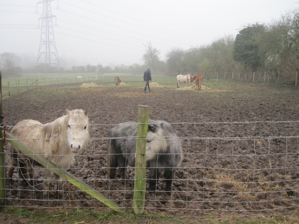 Horses were left with little food (Pic: RSPCA)