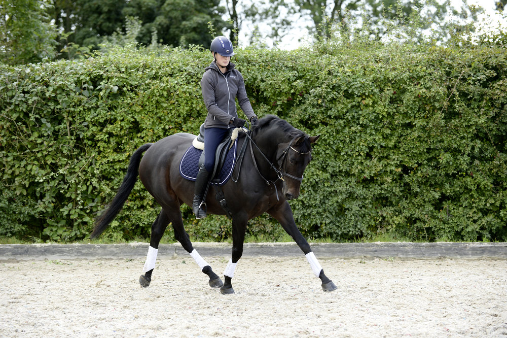 Linking movements such as circles, is a good test of your horse's balance