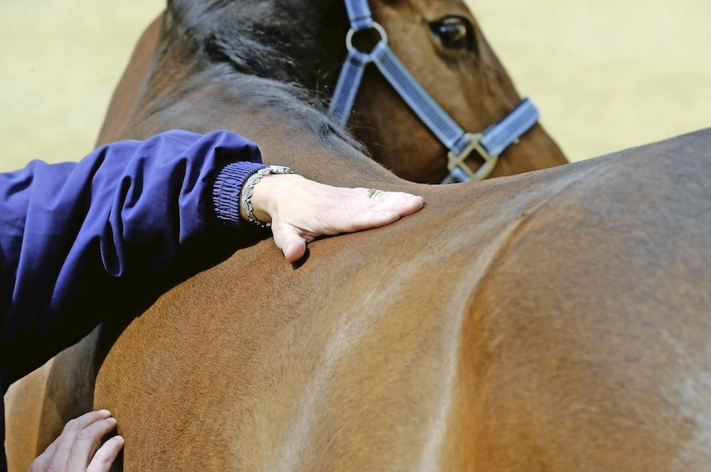 Your horse will appreciate regular massages