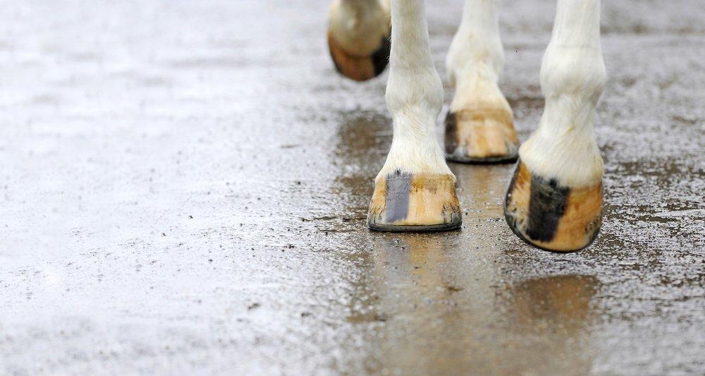 Horse walking.jpg