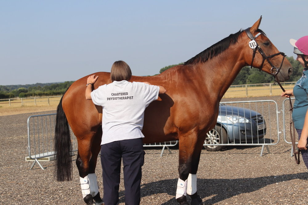 Horses were assessed by physiotherapist Jo Spear before excerise