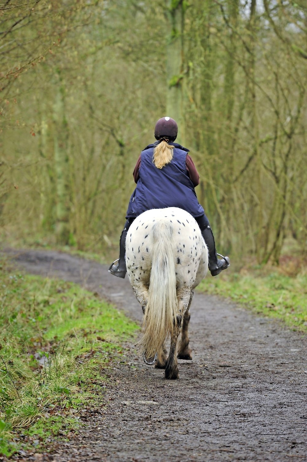 A fat horse is an 'at risk' horse