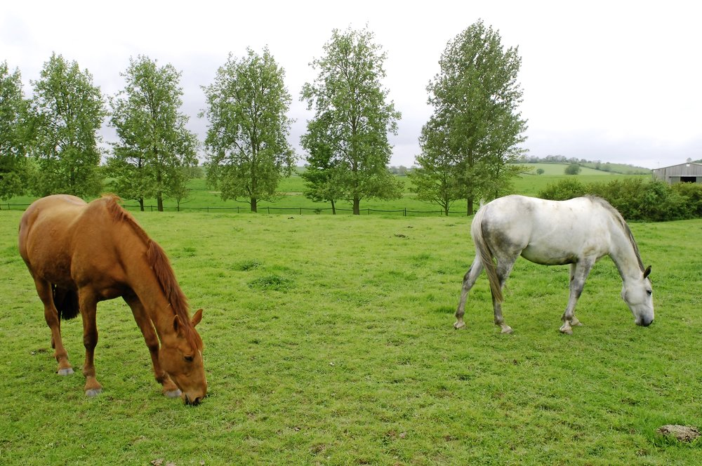 Regular turnout is essential for all horses