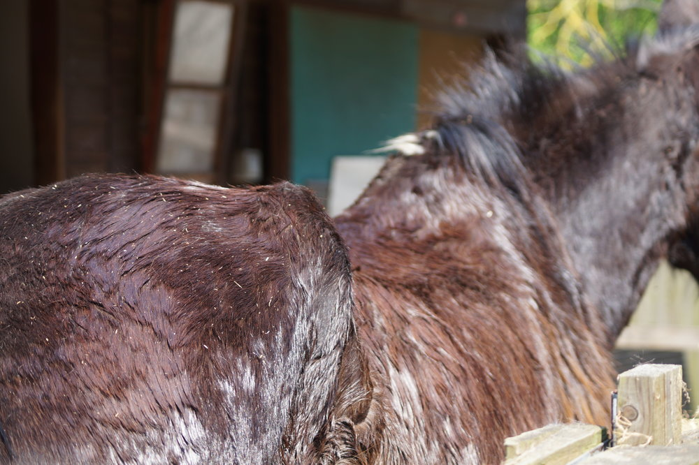 Working together the RSPCA and Redwings have nursed Carmen back to health