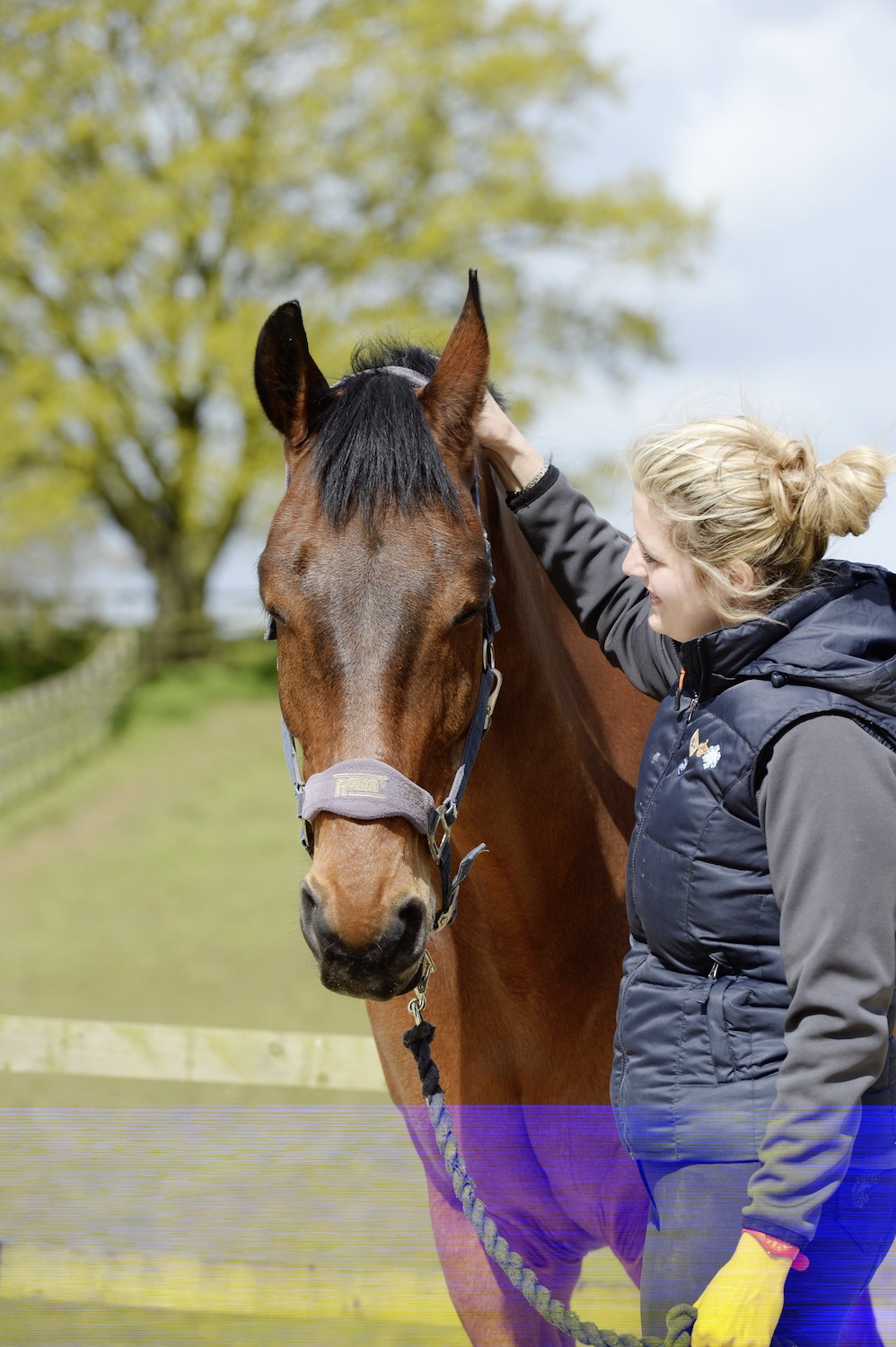 There's lots you can do to help your horse with stress