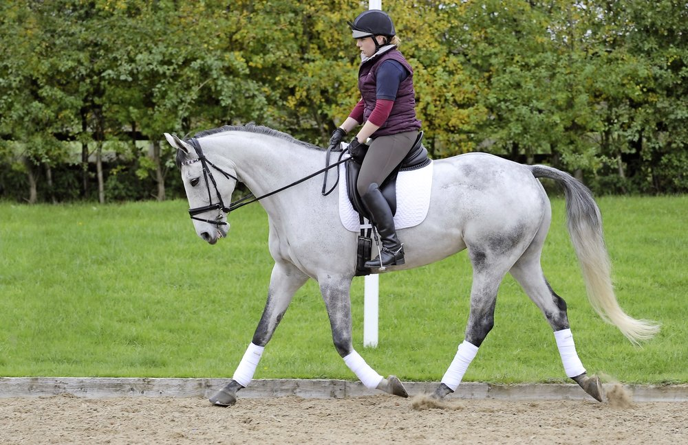 Passionate about horses? Take a look at this fabulous job opportunity