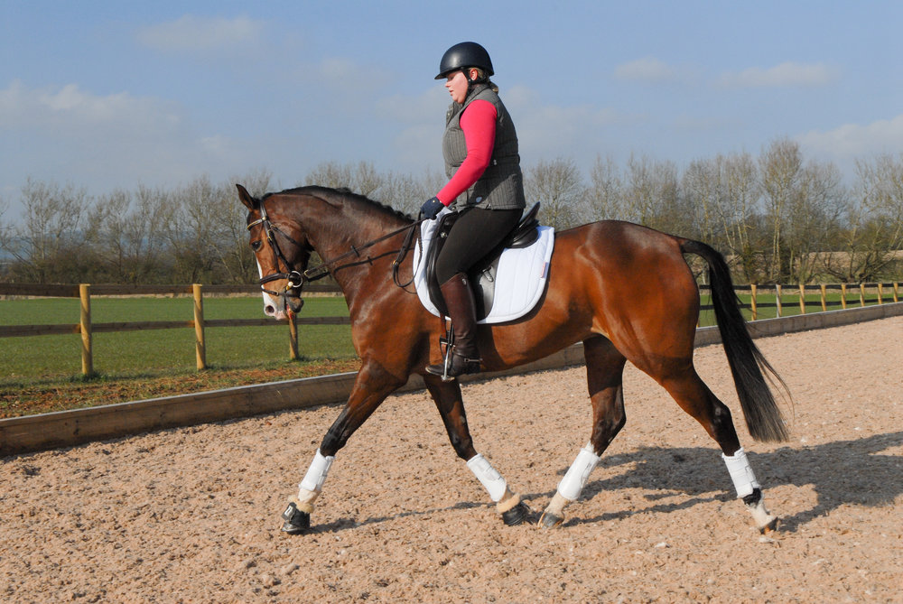 Having a clear understanding of horsey terminology will help you get more out of your lessons