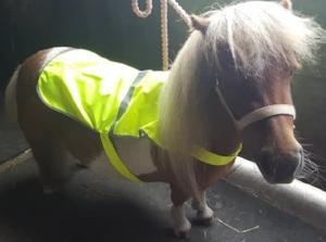 Karen Simons-Musilova's tiny pony