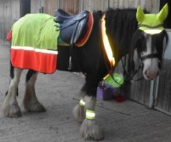 Helen Elliott's pony ready to go