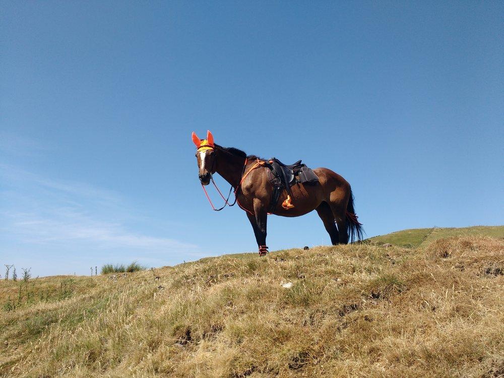 Jessie's favourite hill!