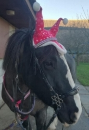 Vicky's not sure about the look, but owner Sally loves her festive ear veil