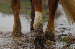 mud feet.jpg
