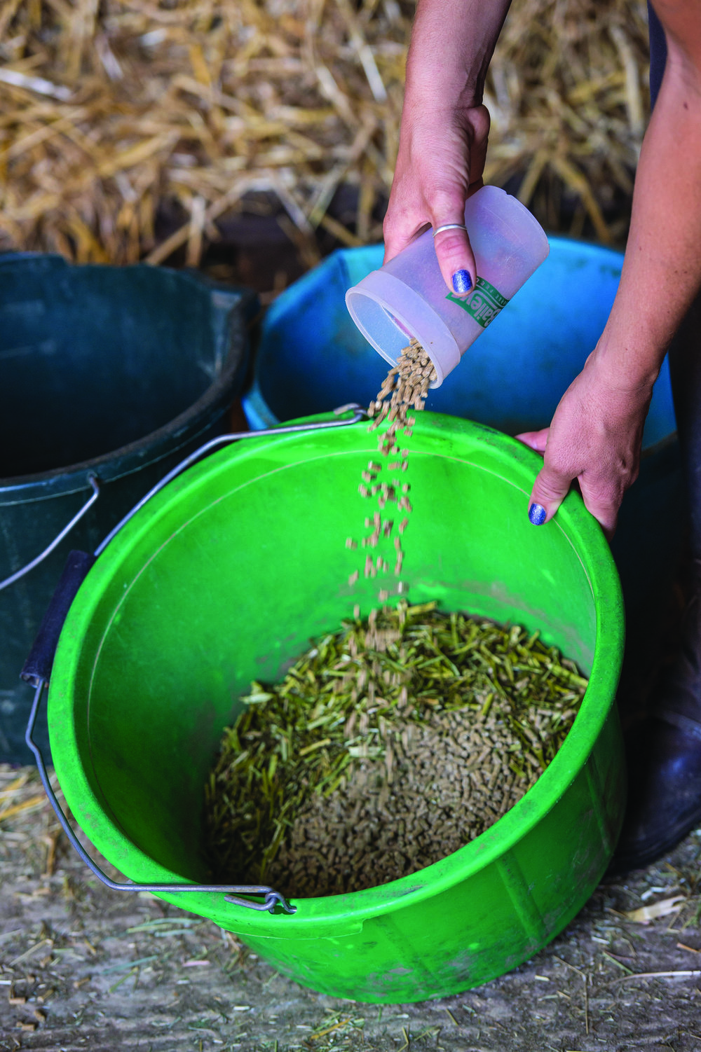 A low calorie balancer will provide nutrients likely to be lacking in forage, without the calories of a mix or cube