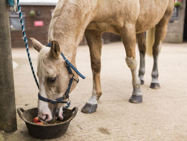 veteran horse feeding.tbm.jpg