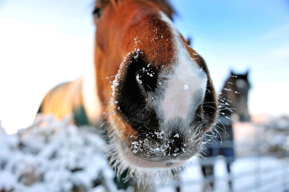 frosty+muzzle.jpg
