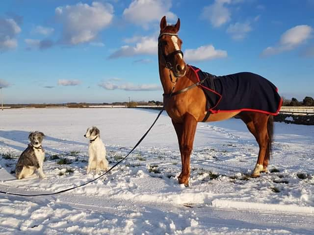 My four-legged family: Zippy my 16-year-old ex-racehorse and Mali & Boo my gorgeous hounds!