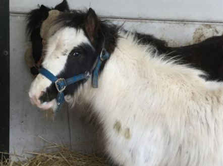 Bubble and Squeak are recovering at Help for Horses