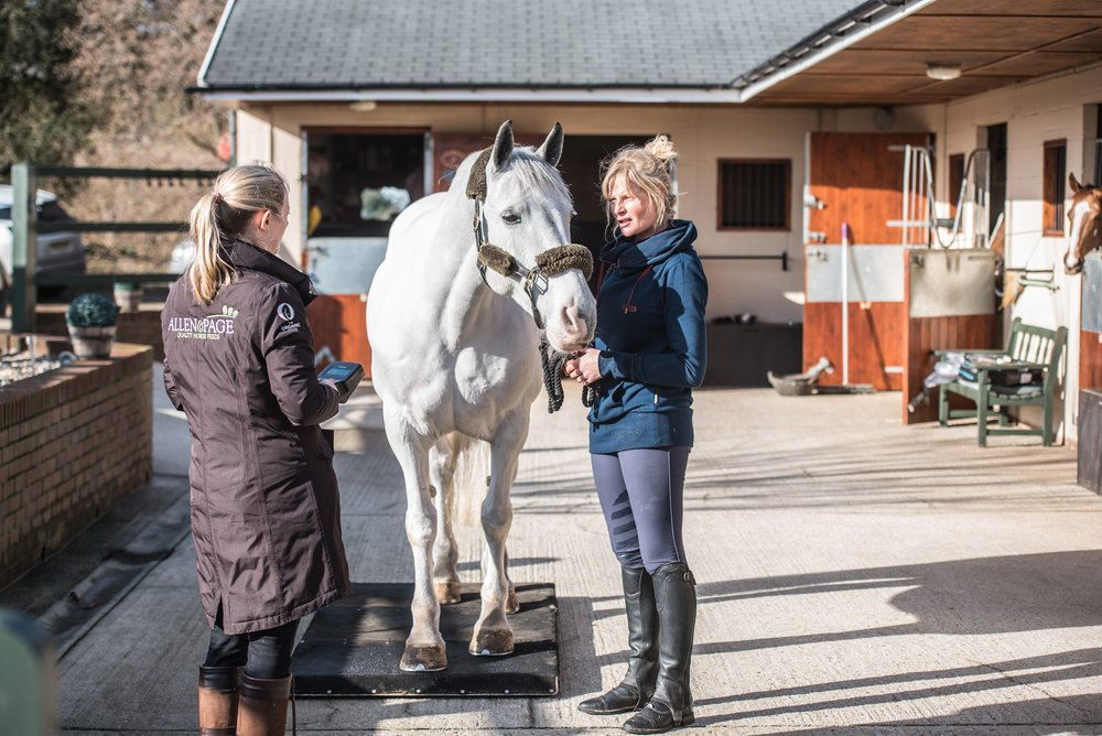 Keep a record of your horse's weight and condition scores to help make adjustments to his diet and routine accordingly