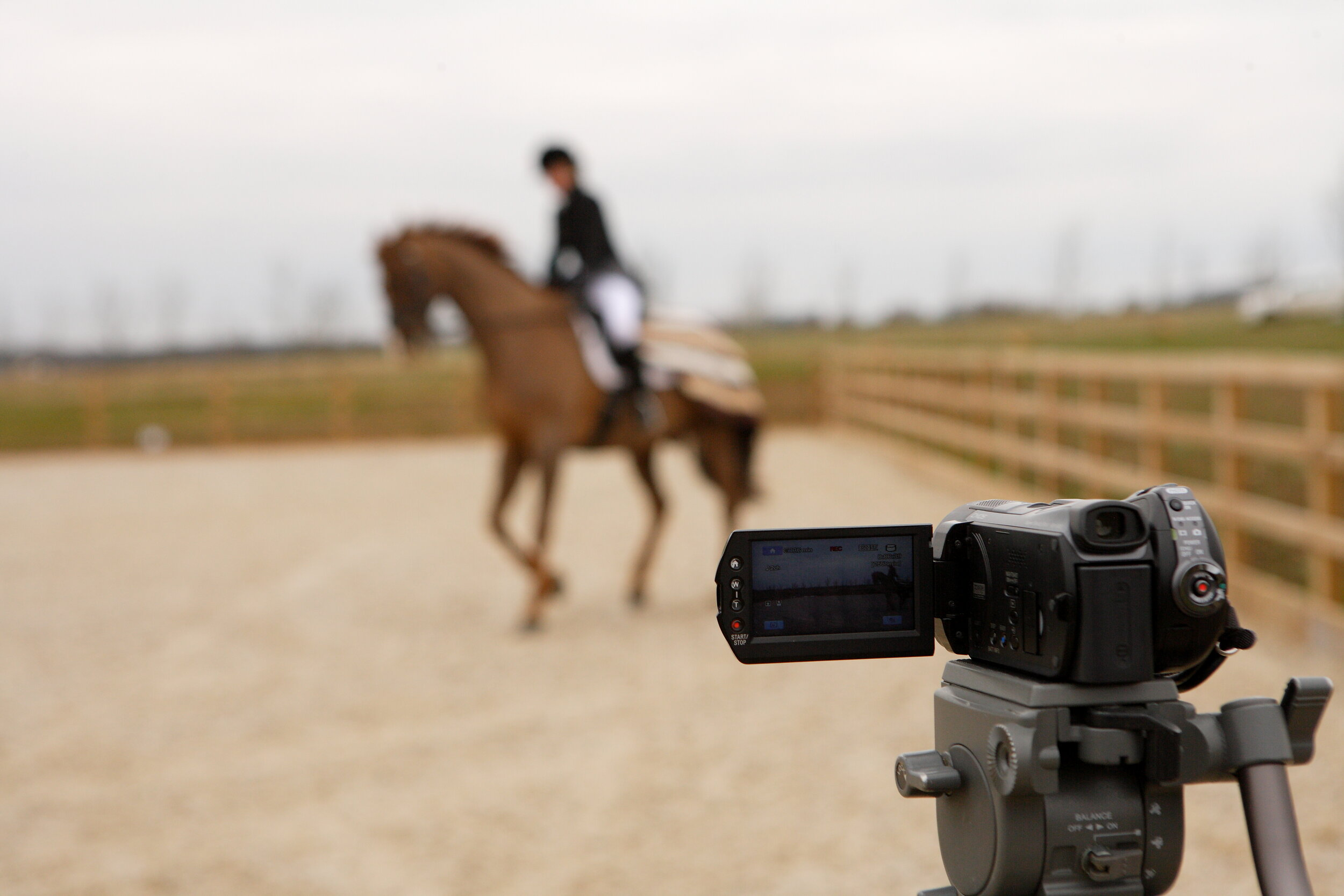 Filming Tips And Tricks For Online Dressage Your Horse Magazine