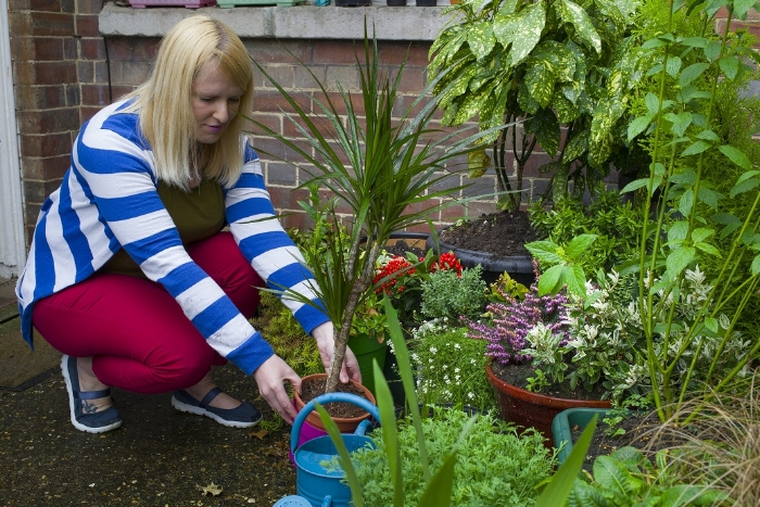Have you got houseplants that have done their best over winter, got through the spring and the temperature changes, but now look a little stressed and in need of some fresh air? For most parts of the country, the cold snaps and frosty weather are now likely to be over until autumn, so why not help them by popping houseplants outside for a breather.  You might see an improvement in them when they get a bit of direct sunshine, some wind in their sails and drops of real rainwater. They'll become less dusty and probably grow quicker, too. Do still keep checking outside temperatures or whether a deluge of rain is forecast, as some tropical indoor plants may not appreciate cold, wet feet.  If the summer weather where you are is erratic at best, try hardening them off as you would your tender crops before letting them fully go outside when it improves. And remember that before you bring them indoors again you should check for slugs and other creepy-crawlies that you might be bringing in with them!