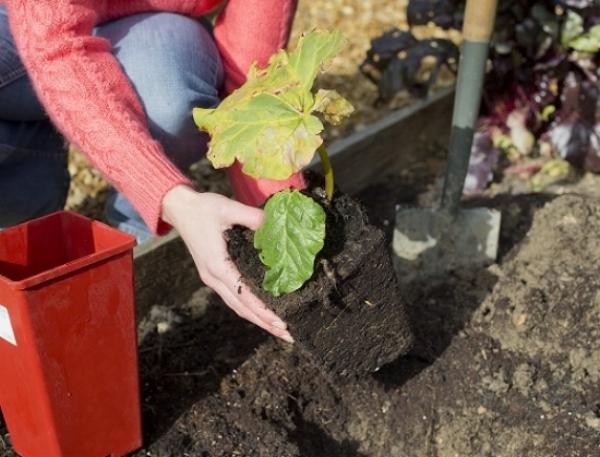 NEW WTDTW Vegetables.jpg