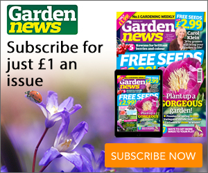 Garden News MPU 17.10.2017.jpg
