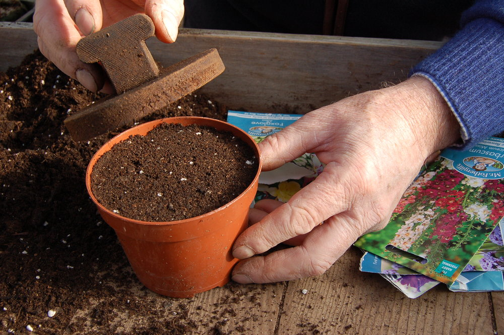 Sowing perennials - step 1.JPG