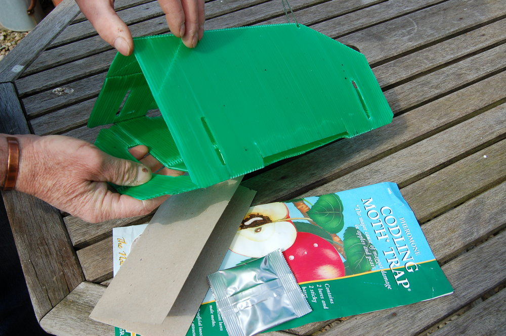 Codling moth trap - step 1.JPG