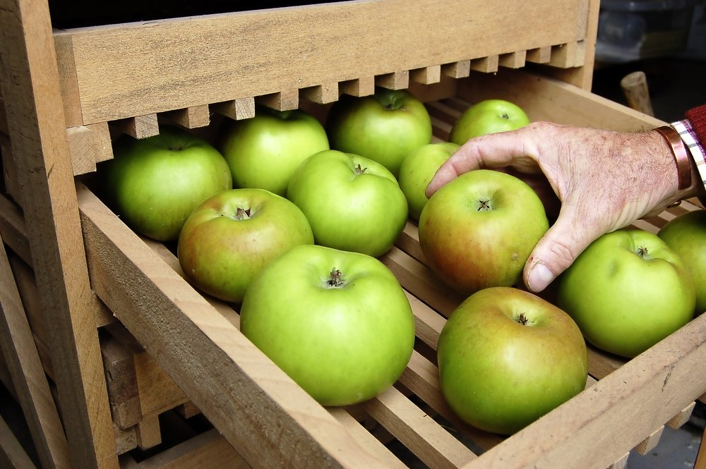 Harvest and store apples - step 4.jpg