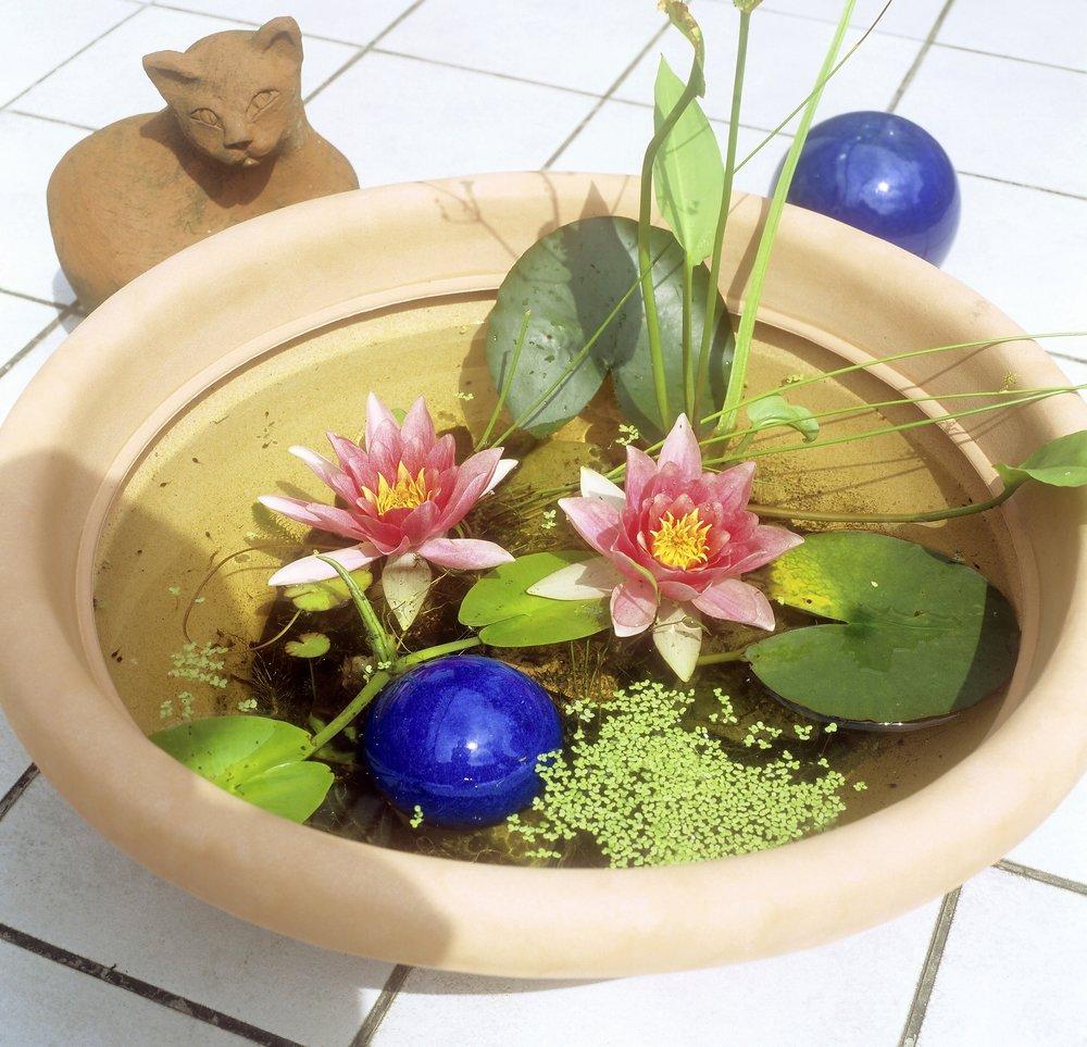 Make a bowl pond
