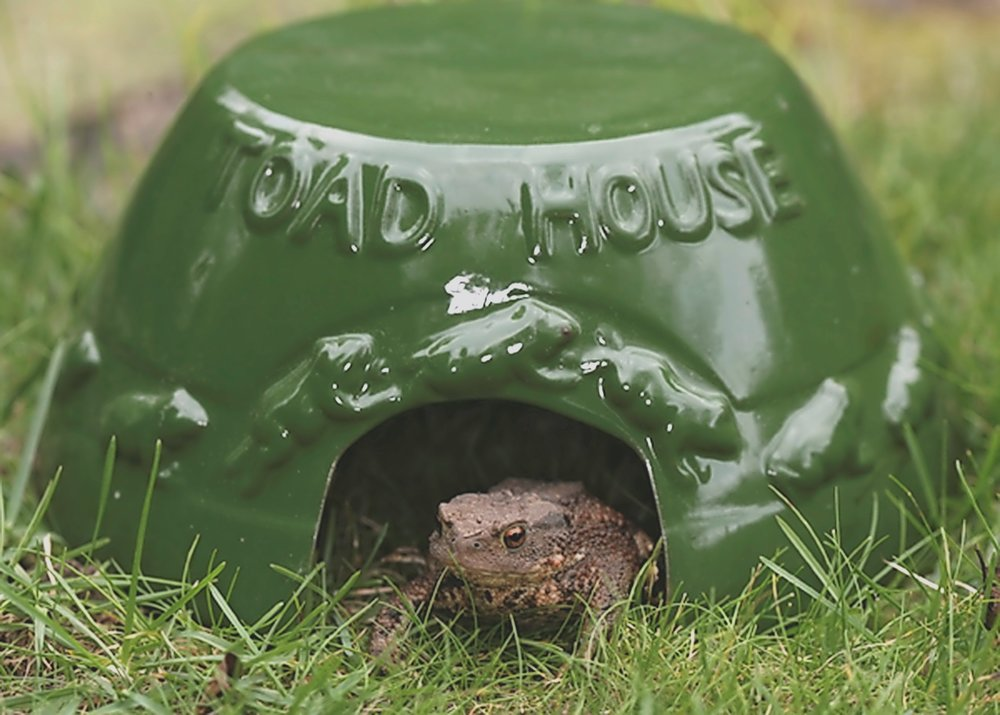 Add a toad house