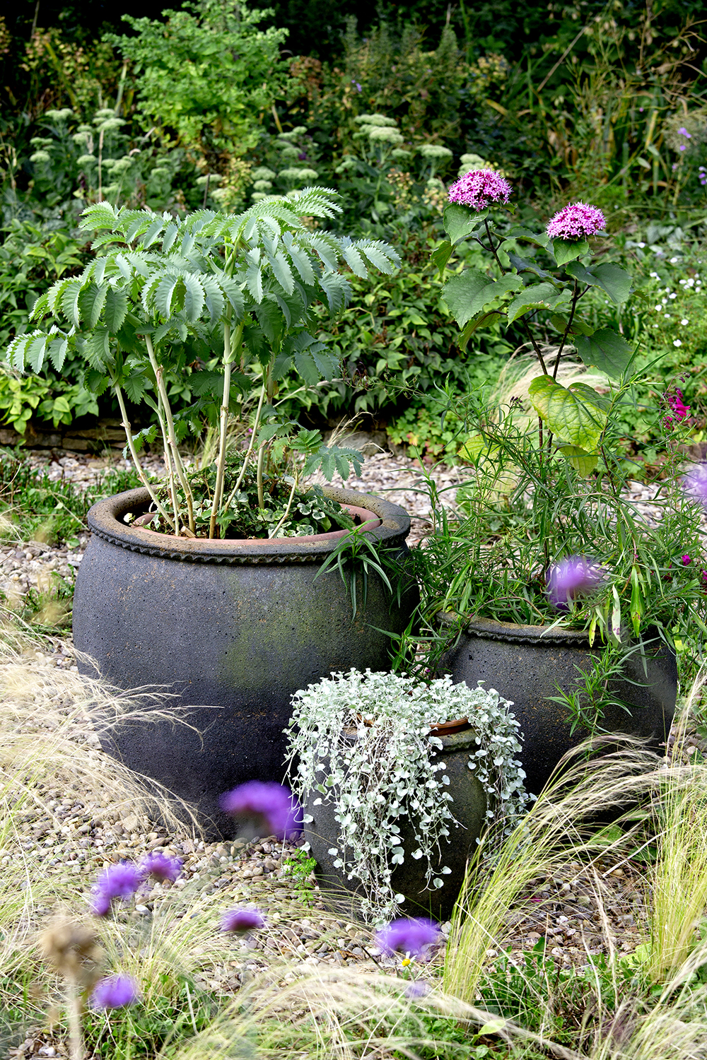 A trio of matching pots in different sizes helps connect disparate plants. The shrub is  Melianthus major , the pink-flowered plant is  Clerodendrum bungei; t he trailing plant is dichondra 'Silver Falls'