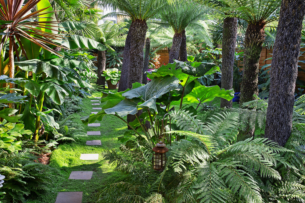 Under his towering tree ferns Patrick grows a carpet of shade-tolerant soleirolia, with stepping stones dotted through. Large-leaved plants include  Petasites japonicus giganteus  and tender banana palm,  Musa basjoo