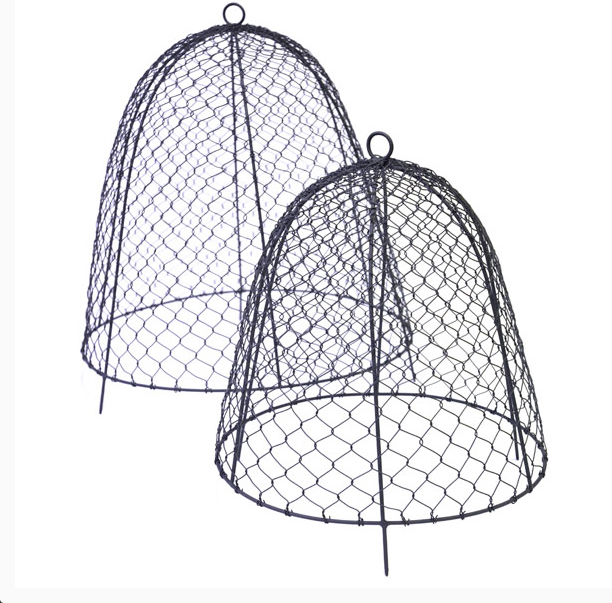 Squirrel-proof cloches from £15.99