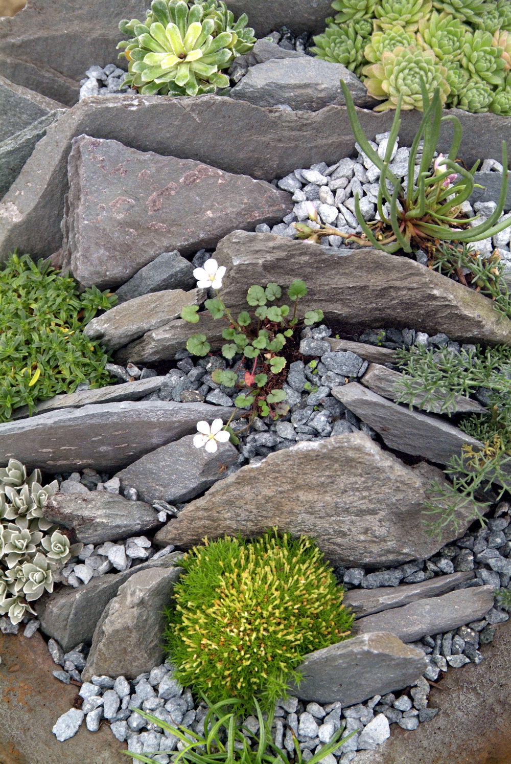 Rediscover the rockery garden answers for Small rock garden designs
