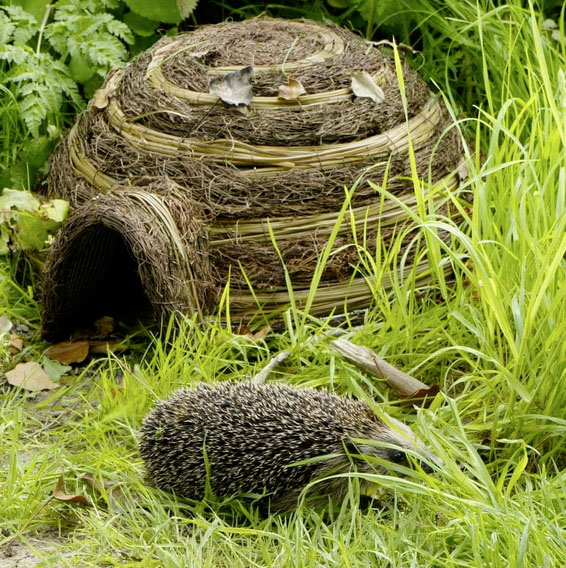 Igloo hedgehog home £17.99 Find Me A Gift 01926 818 800; www.findmeagift.co.uk