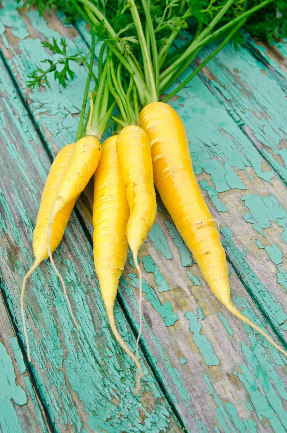 Carrot 'Jaune Obtuse de Doubs'