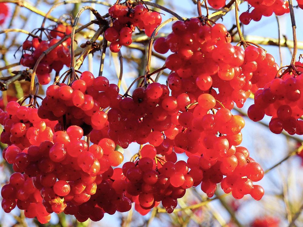 Berry 9