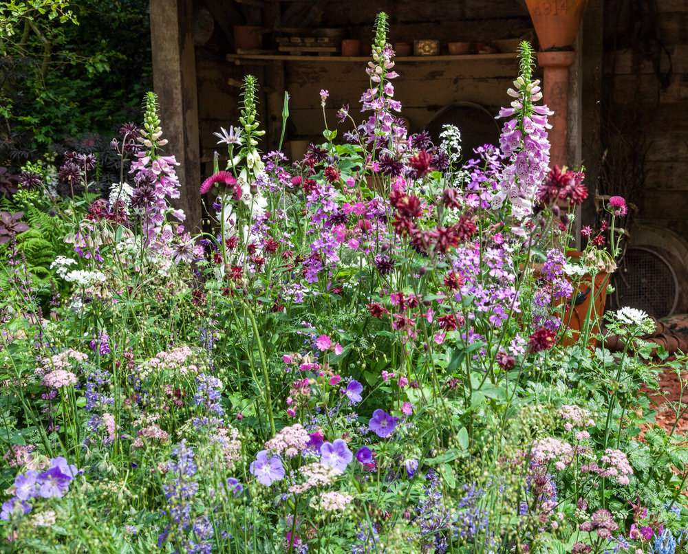 Aquilegias and foxgloves create a relaxed, cottage style