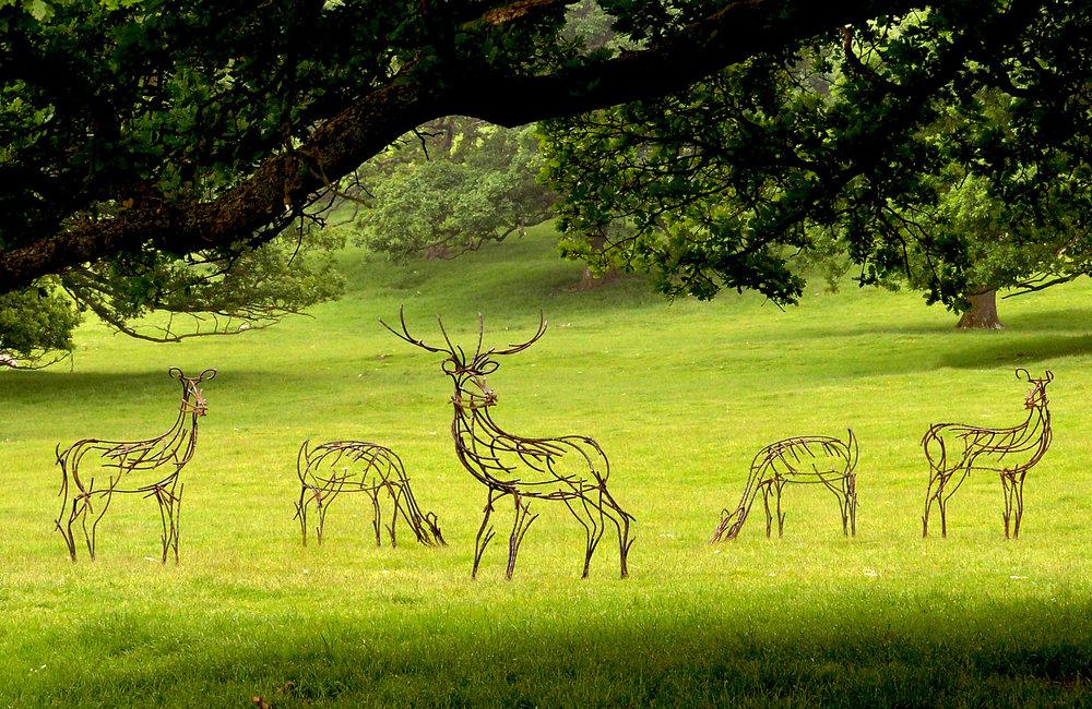 Barbon herd.jpg